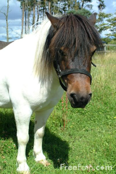 01 36 56   Shetland Pony web Teen Suicide This is a follow up to the previous post about bullying and ...