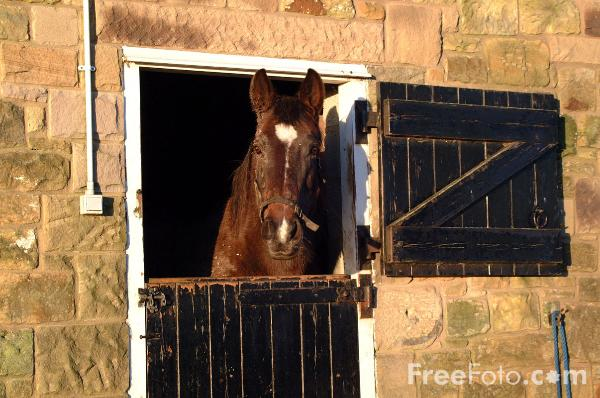 Horse and Stable pictures, free use image, 01-39-1 by FreeFoto.