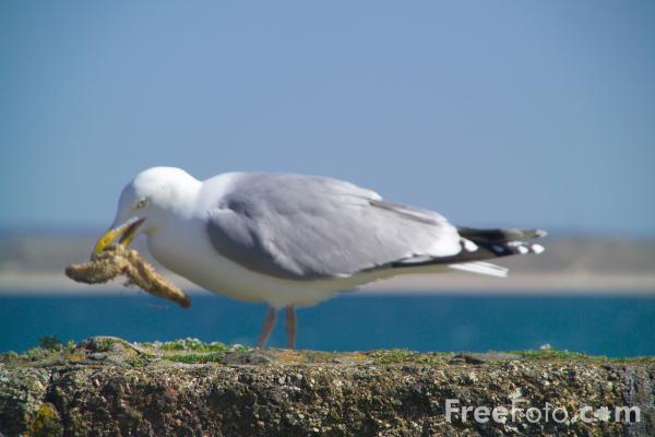 Can Seagulls Eat Dry Dog Food