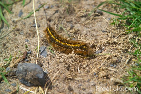 Picture of Caterpillar - Free Pictures - FreeFoto.com