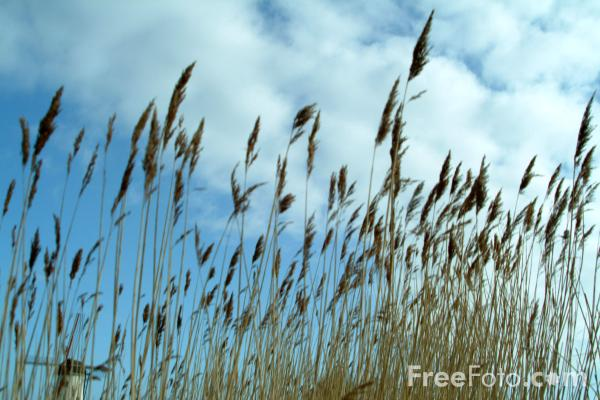 Picture of Grass, Damme, Belgium - Free Pictures - FreeFoto.com