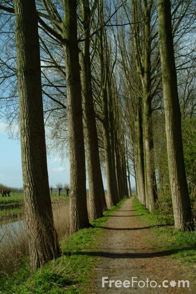 Picture of Canalside Walk, Damme, Belgium - Free Pictures - FreeFoto.com