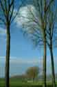 Image Ref: 03-03-79 - Tree-lined Canal, Damme, Belgium, Viewed 6438 times
