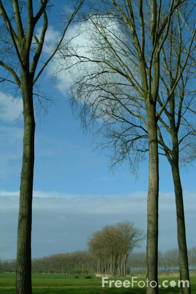 Picture of Tree-lined Canal, Damme, Belgium - Free Pictures - FreeFoto.com