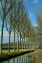 Image Ref: 03-03-81 - Tree-lined Canal, Damme, Belgium, Viewed 7069 times