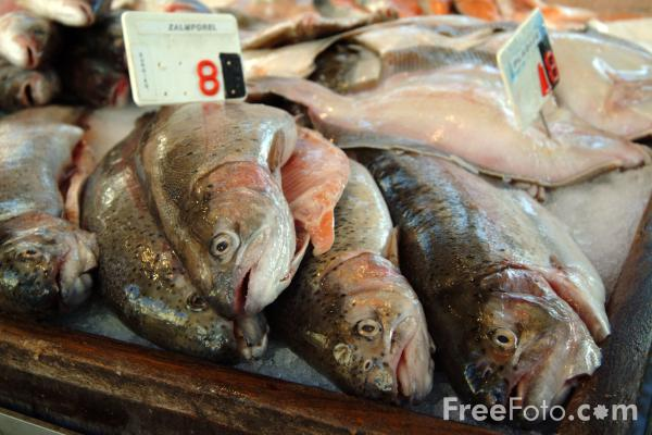 Picture of Fish Market, Bruges - Free Pictures - FreeFoto.com