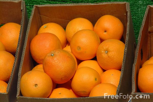 Picture of Oranges - Free Pictures - FreeFoto.com