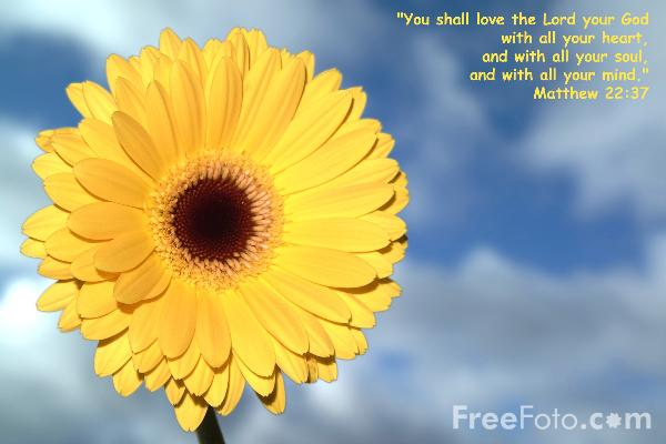Picture of You shall love the Lord your God - Free Pictures - FreeFoto.com
