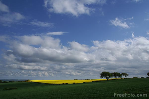 Picture of rural english landscape - Free Pictures - FreeFoto.com