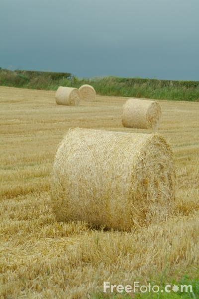 Picture of Bales in a field at Harvest Time - Free Pictures - FreeFoto.com
