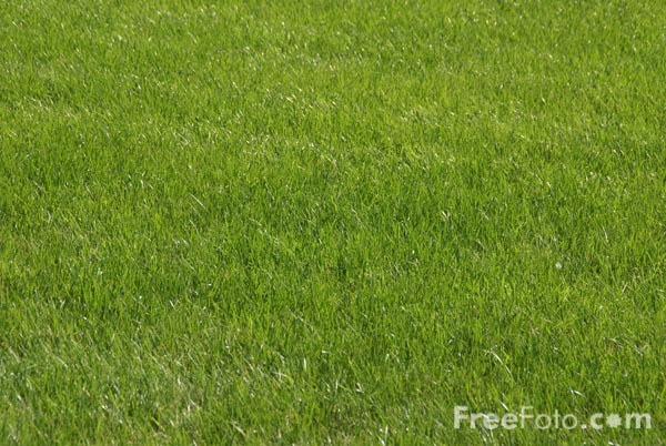 Picture of Grass - Free Pictures - FreeFoto.com