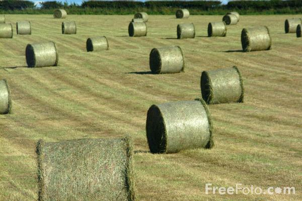 Picture of Round Bales of Hay - Free Pictures - FreeFoto.com