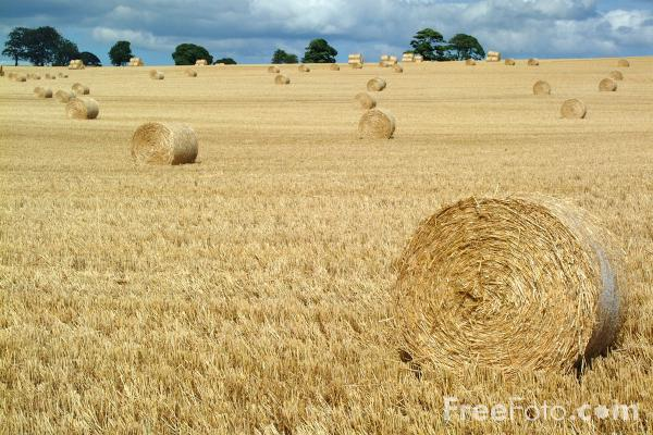Picture of Round Hay Bales - Free Pictures - FreeFoto.com