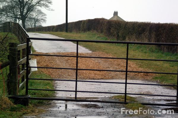 Picture of Hay containing disinfectant laid to halt the spread of Foot and Mouth, Near Old Stillington, County Durham - Free Pictures - FreeFoto.com