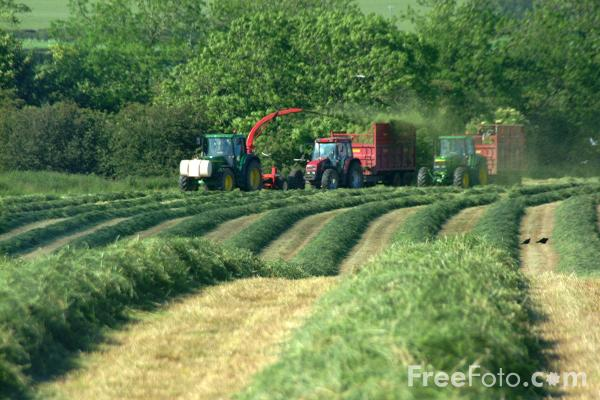 Picture of Grass harvest for silage - Free Pictures - FreeFoto.com
