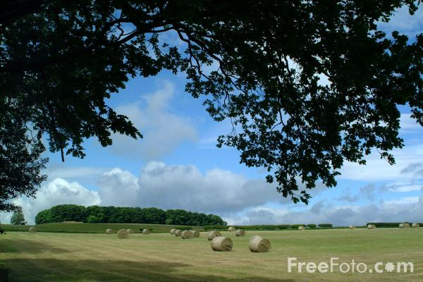 Picture of Grass harvested for silage - Free Pictures - FreeFoto.com