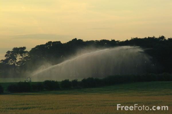 Picture of Watering Crops - Free Pictures - FreeFoto.com
