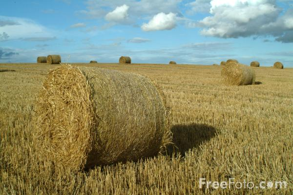 Picture of Bales of Hay - Free Pictures - FreeFoto.com