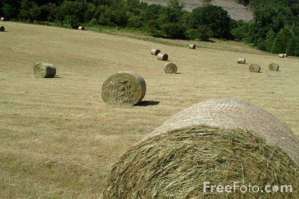 Picture of Harvest Time in England - Free Pictures - FreeFoto.com