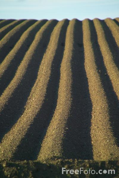 Picture of Ploughed Field - Free Pictures - FreeFoto.com