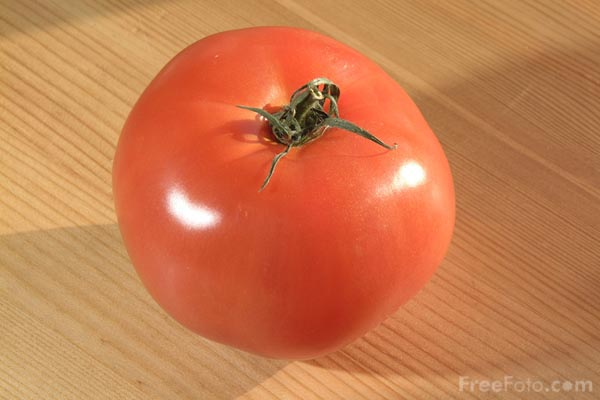 Picture of Tomatoe - Free Pictures - FreeFoto.com