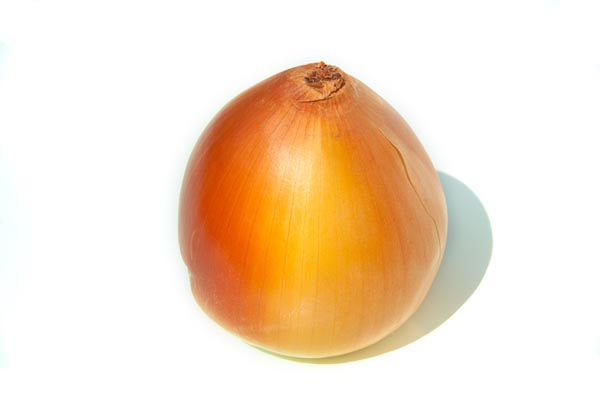 Picture of Onion - Free Pictures - FreeFoto.com