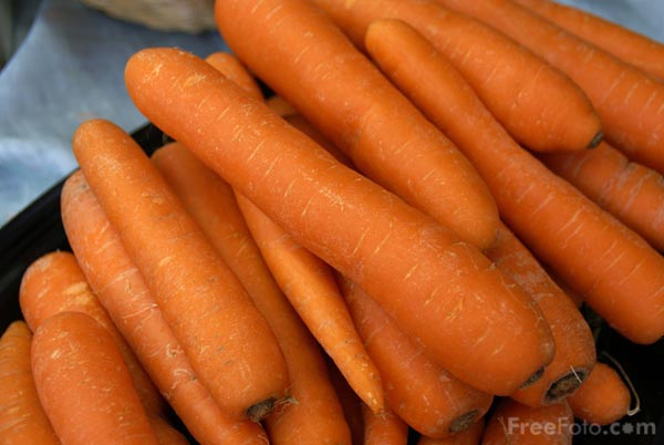 Picture of Carrots - Free Pictures - FreeFoto.com