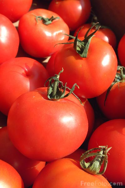 Picture of Tomatoes - Free Pictures - FreeFoto.com