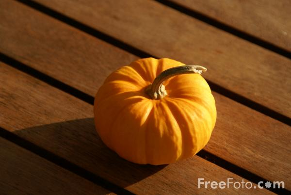 Picture of Pumpkins - Free Pictures - FreeFoto.com