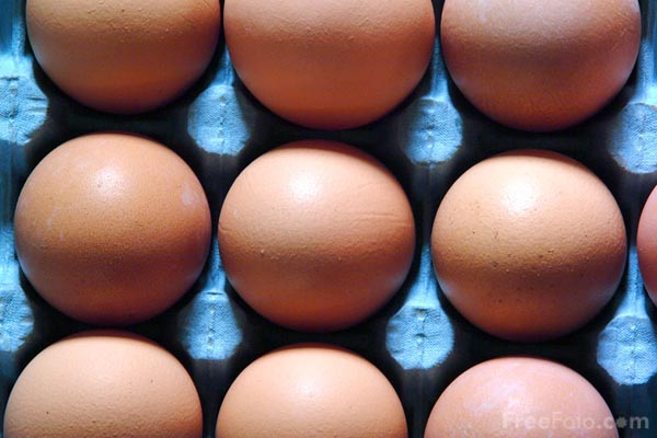 Picture of Egg2 - Free Pictures - FreeFoto.com