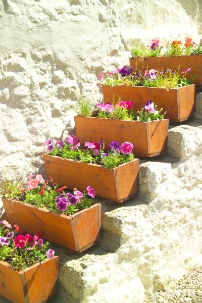 Picture of Flower Boxes - Free Pictures - FreeFoto.com