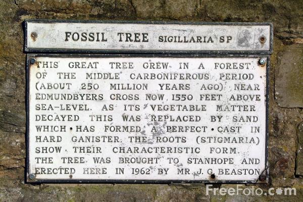 Picture of Fossil tree, Stanhope - Free Pictures - FreeFoto.com