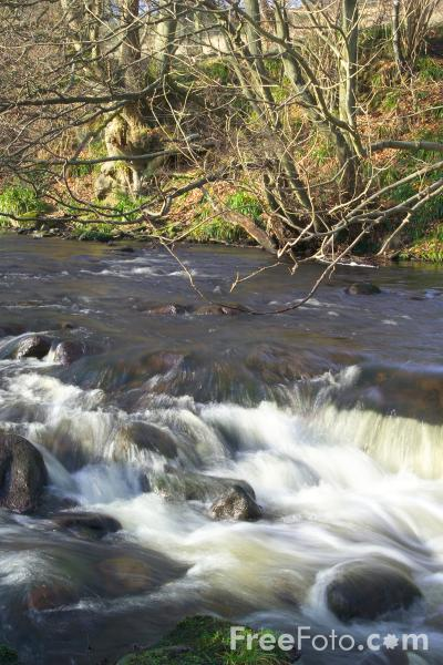 Picture of River Derwent, County Durham - Free Pictures - FreeFoto.com