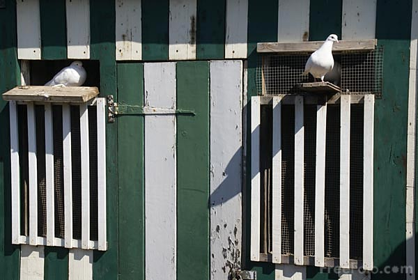 Picture of Doves and dovecot - Free Pictures - FreeFoto.com