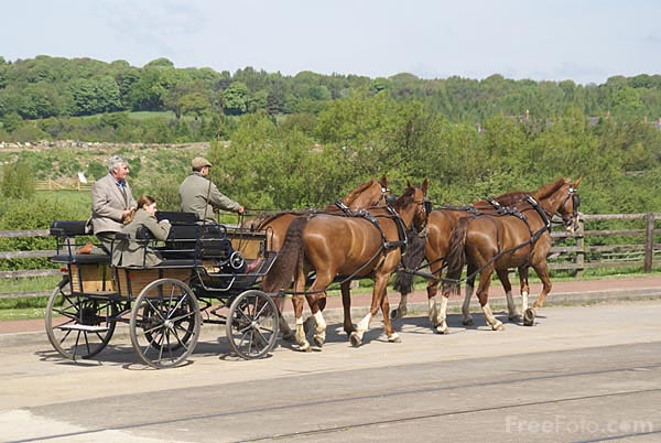 Picture of Horse drawn carriage - Free Pictures - FreeFoto.com