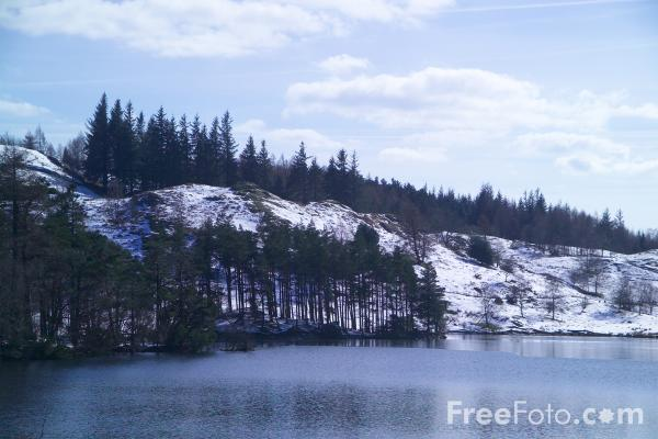 Picture of Tarn Hows, The Lake District - Free Pictures - FreeFoto.com