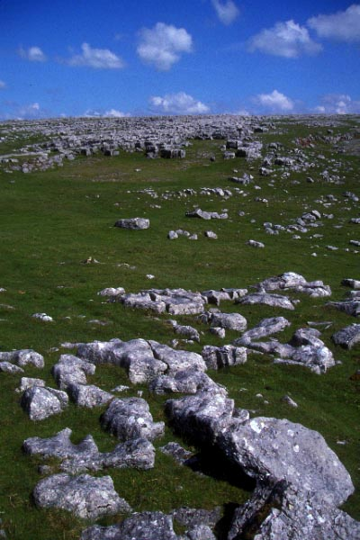 Picture of Great Asby Scar Limestone Pavement - Free Pictures - FreeFoto.com