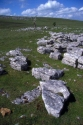 Image Ref: 1009-20-52 - Great Asby Scar Limestone Pavement, Viewed 7153 times