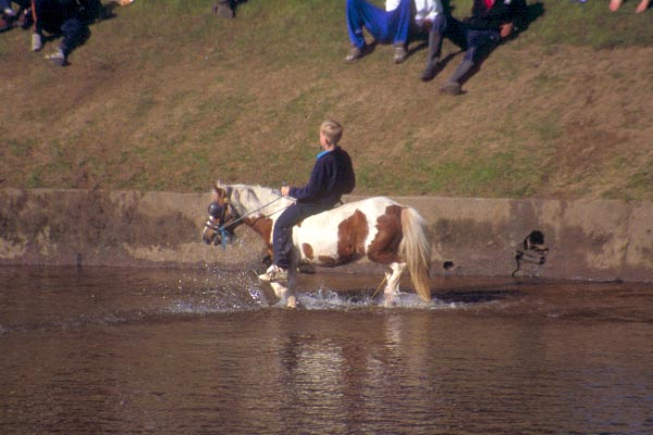 Picture of Appleby Horse Fair - Free Pictures - FreeFoto.com