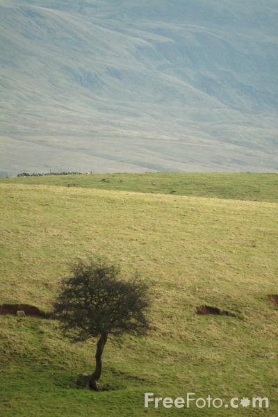 Picture of Mallerstang Dale, Cumbria - Free Pictures - FreeFoto.com