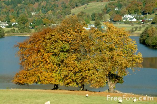 Picture of Lake Grasmere, Grasmere, Cumbria - Free Pictures - FreeFoto.com