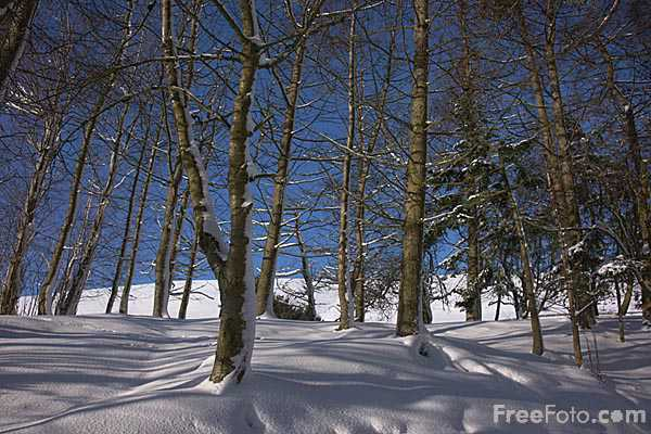 Picture of Winter Trees - Free Pictures - FreeFoto.com