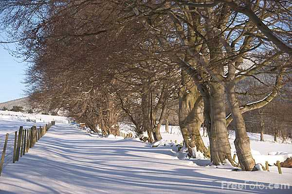 Picture of Winter 2010 in Innerleithen - Free Pictures - FreeFoto.com
