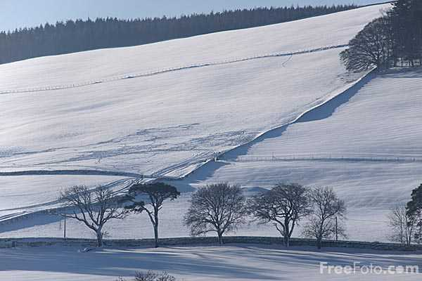 Picture of Winter snow covers the Tweed Valley - Free Pictures - FreeFoto.com
