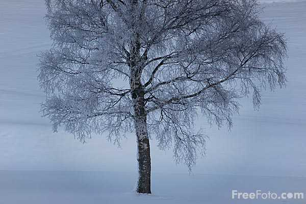 Picture of Tree dusted with Snow - Free Pictures - FreeFoto.com
