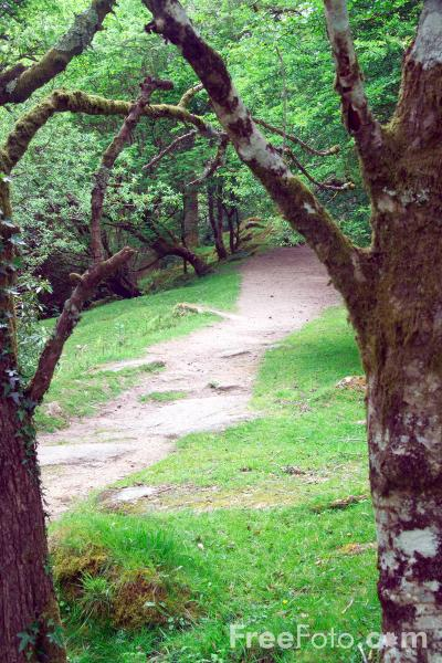 Picture of Footpath, Dartmoor, Devon - Free Pictures - FreeFoto.com