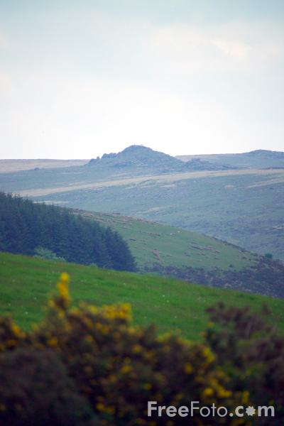 Picture of Dartmoor, Devon - Free Pictures - FreeFoto.com