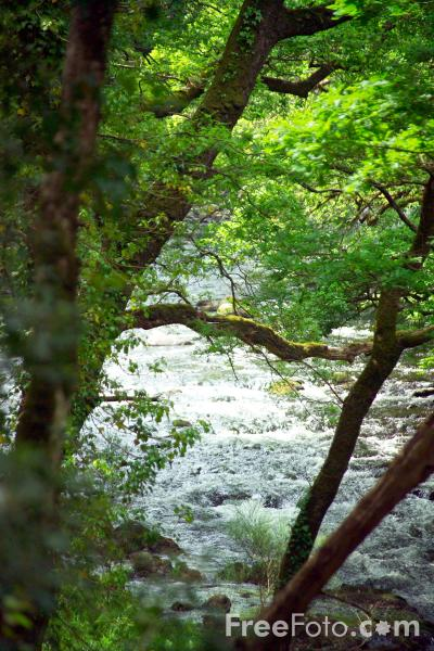 Picture of River Dart, Dartmoor, Devon - Free Pictures - FreeFoto.com