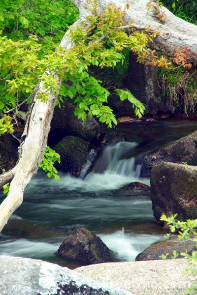 Picture of Flowing Water, Dartmeet, Dartmoor, Devon - Free Pictures - FreeFoto.com