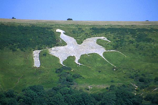 Picture of White Horse - Free Pictures - FreeFoto.com